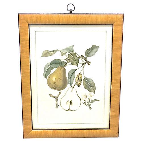 Pear & Branch Engraving