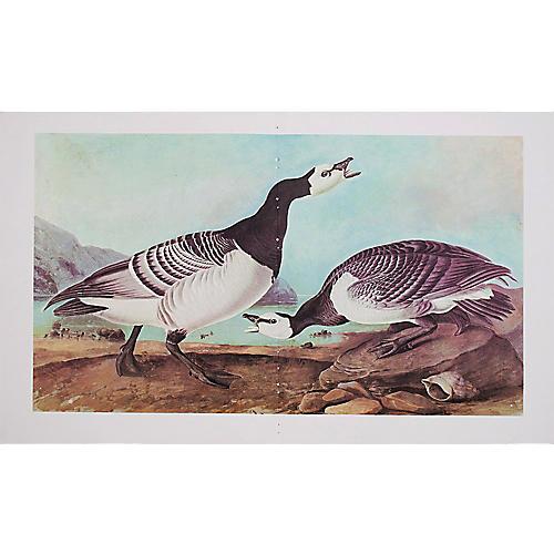Print of Barnacle Goose, 1966