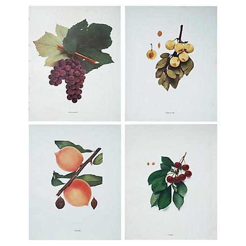 Antique Fruit Prints by Hedrick, S/4