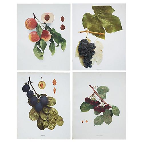 Set of 4 Large Antique Fruit Plates