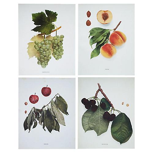 Antique Fruit Photoengravings, S/4