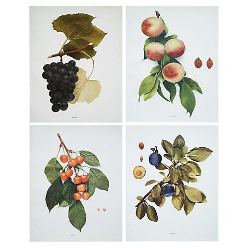Antique Fruit Prints by Hedrick, S/4