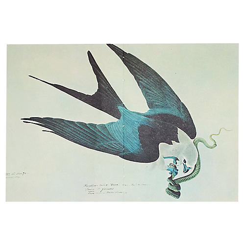 Audubon Lithograph, 1966