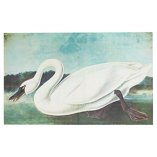 Whistling Swan by Audubon