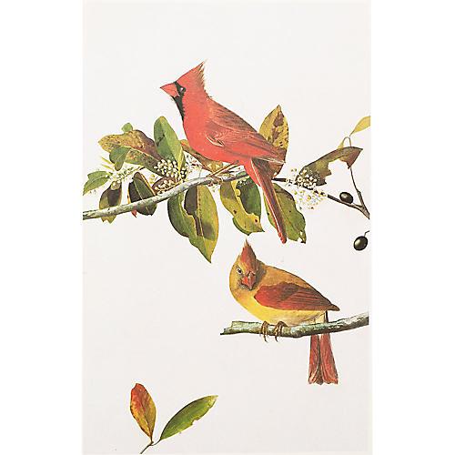Common Cardinal Grosbeak by Audubon
