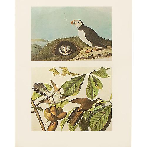 Puffin & Yellow-billed Cuckoo by Audubon