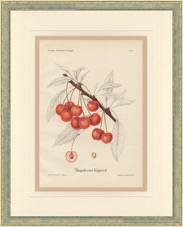 Cherry Print, 1924