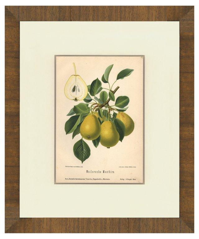 German Fruit Print,   1890