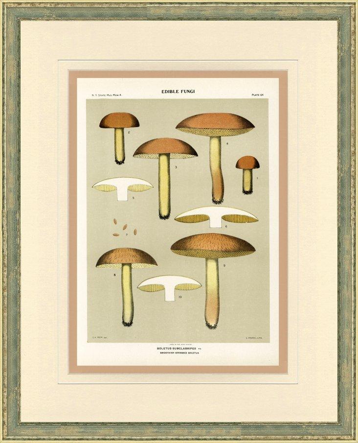Mushroom Print,  1895