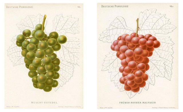 Grape Prints, Pair