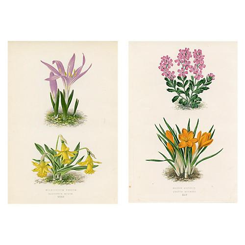 Alpine Wildflowers, Pair