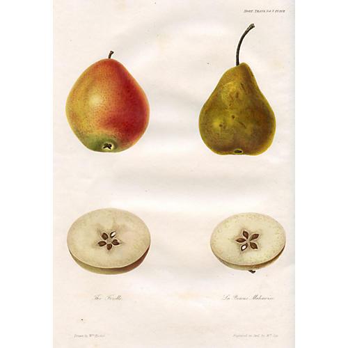 Pear Print, 1824