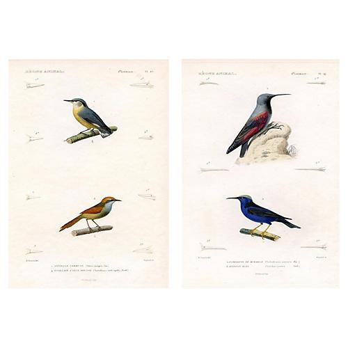 Asian Bird Prints, Pair
