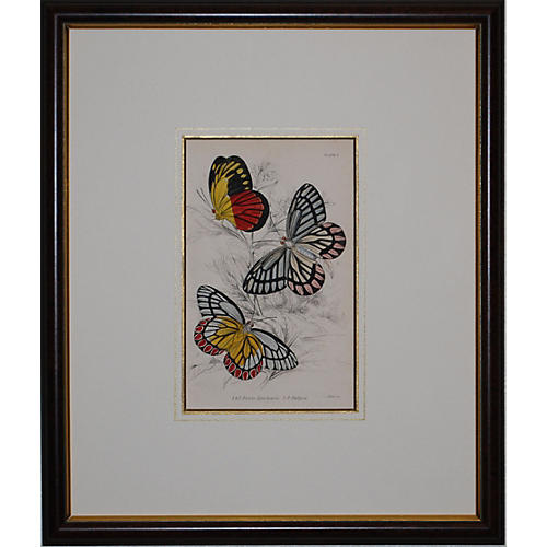 Butterfly Engraving, 1837