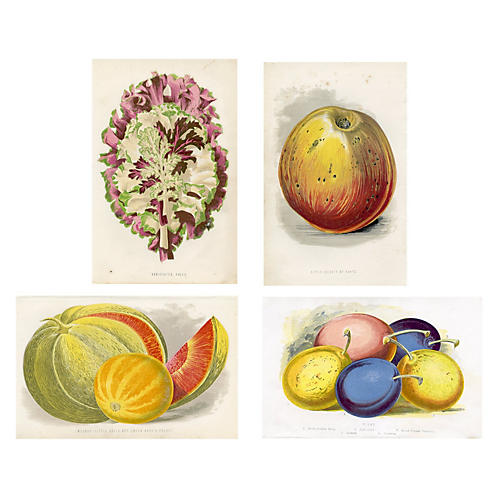 Kitchen Garden Botanical Prints, Set/4