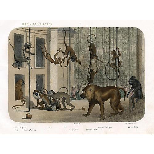1850s Jardin des Plantes