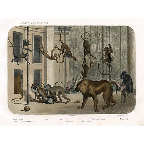 1850s Monkeys at a Paris Zoo