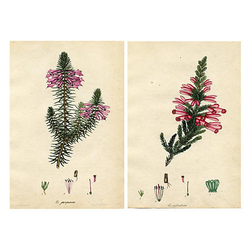 19th-C. English Heather Prints, Pair