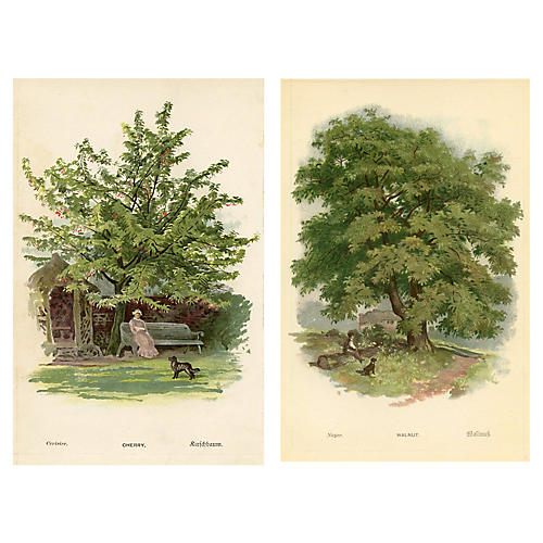 19th-C. Cherry & Walnut Tree Prints, S/2