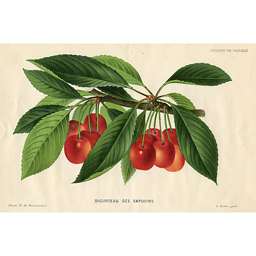 19th-C. Belgium Cherry Print