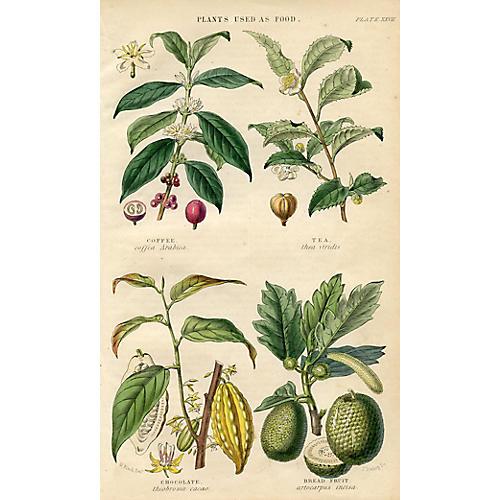 Plants Used as Food, 1860s