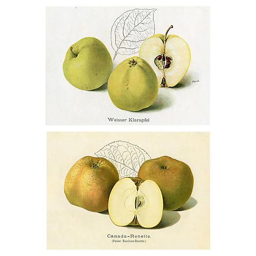 Vintage German Apples, Pair