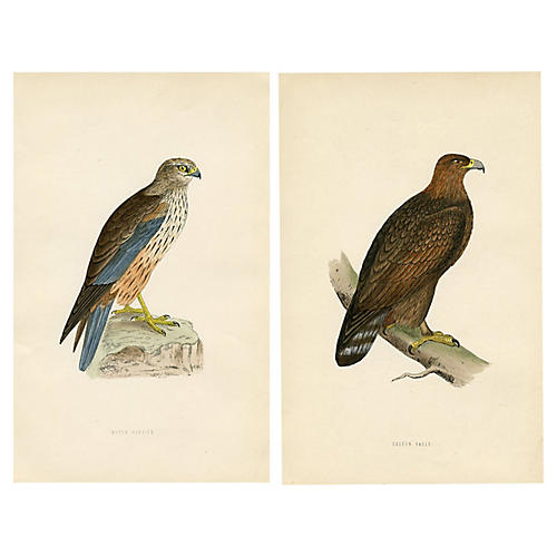 1870s Eagle and Harrier Prints, Pair