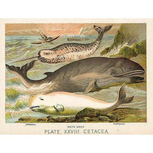 19th-C. Whale Print