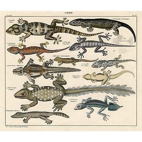 19th-C. Gecko Print