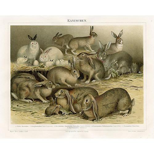 Rabbits Chromolithograph, Late 1800s