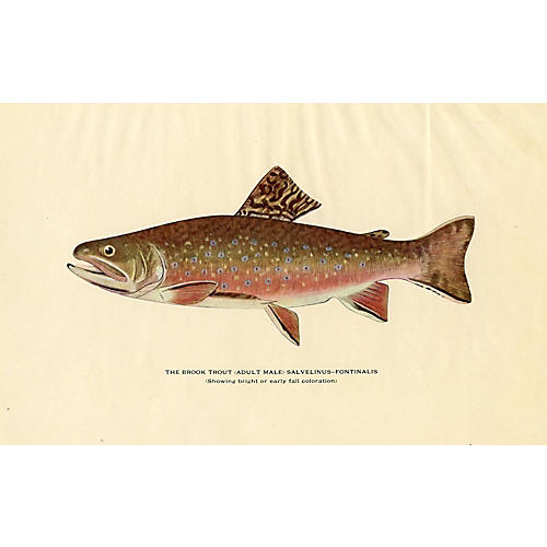 Brook Trout, 1914