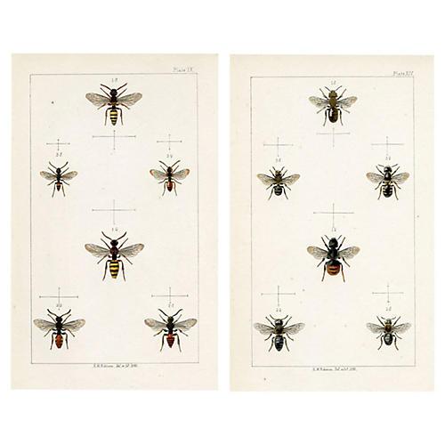 19th-C. Bee Prints, Pair