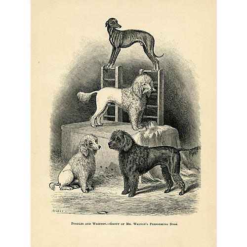 Poddles and Whippet, 1880s