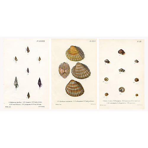 British Seashell Prints, S/3