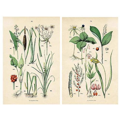 19th-C. Italian Botanical Prints, Pair