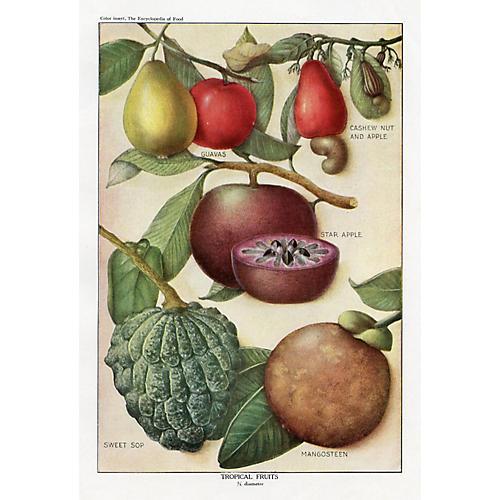 Tropical Fruit, C. 1920