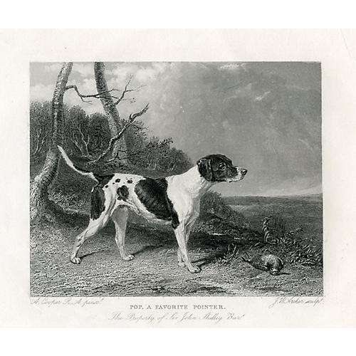 English Hunting Dog Engraving, 1843