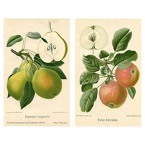 19th-C. Apple & Pear Prints, S/2