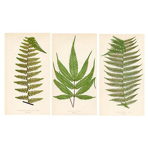 19th-C. British Ferns, S/3