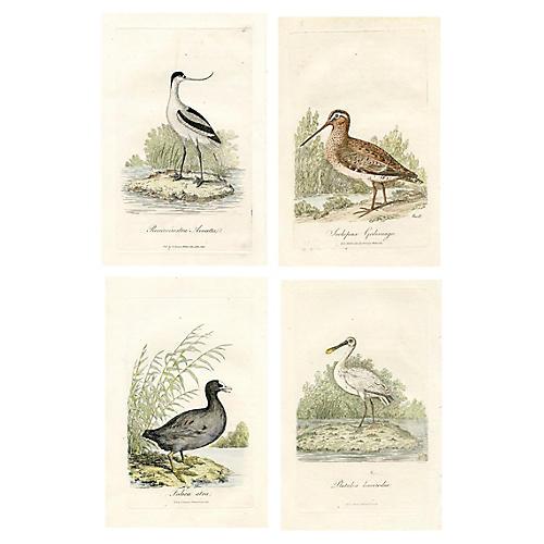 1821 British Shorebird Engravings, S/4