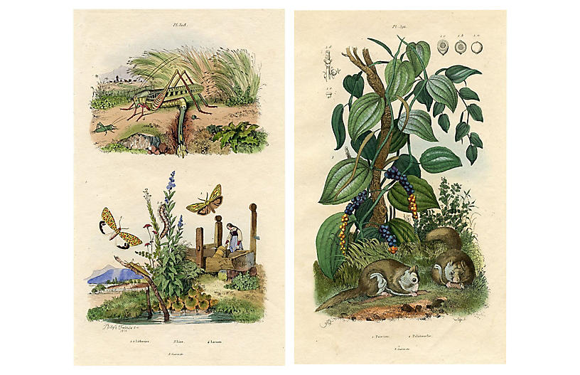 French Nature Prints by Felix Guerin, Pr