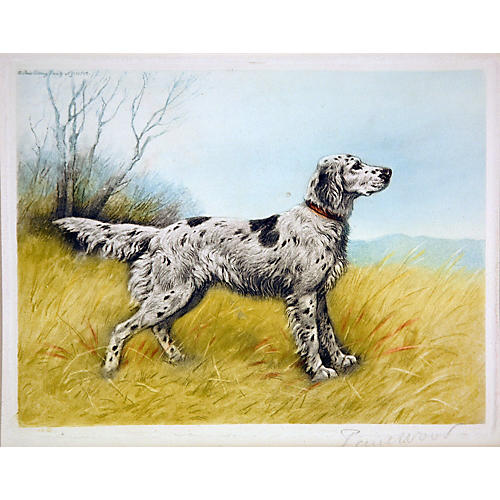 French Setter by Paul Wood