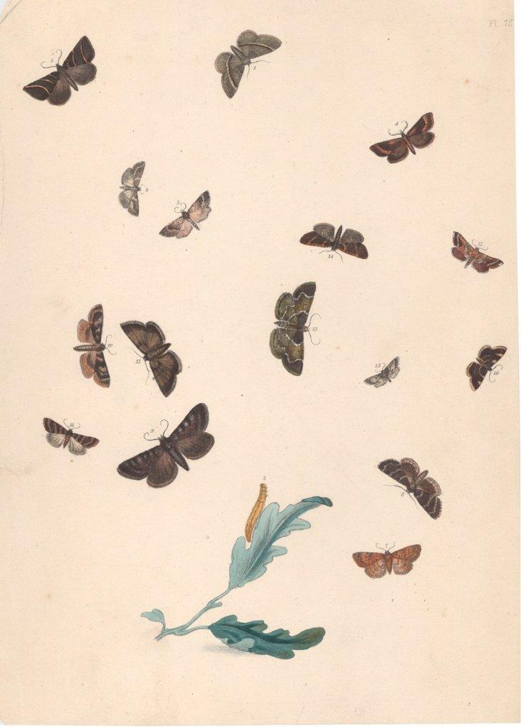 Butterflies Engraving