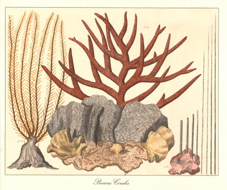 Precious            Corals