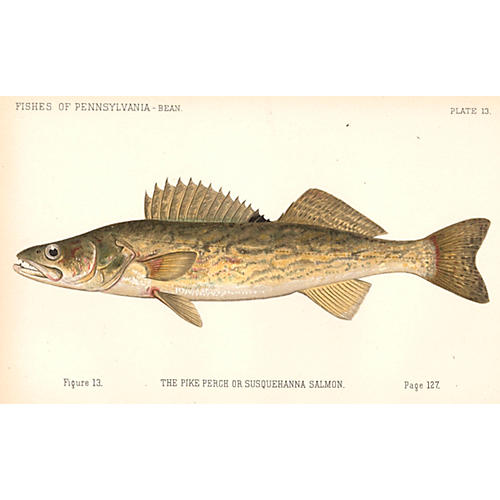The Pennsylvania Pike Perch