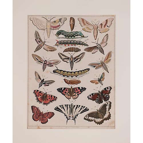 More Butterflies & Moths