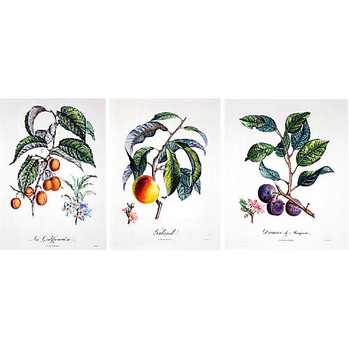 Gorgeou Fruit Etchings, S/3