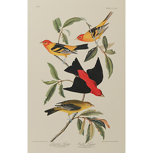 Louisiana & Scarlet Tanager by Audubon