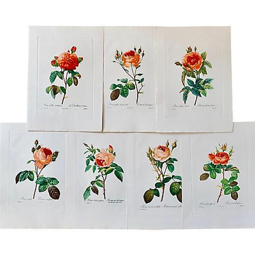 Redouté Roses, S/7