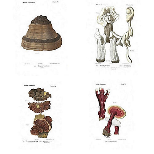 Mushrooms of France Lithographs, S/4